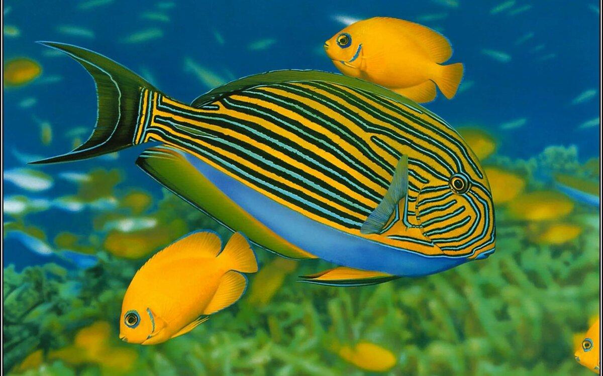 смотреть картинки рыб в море один тот