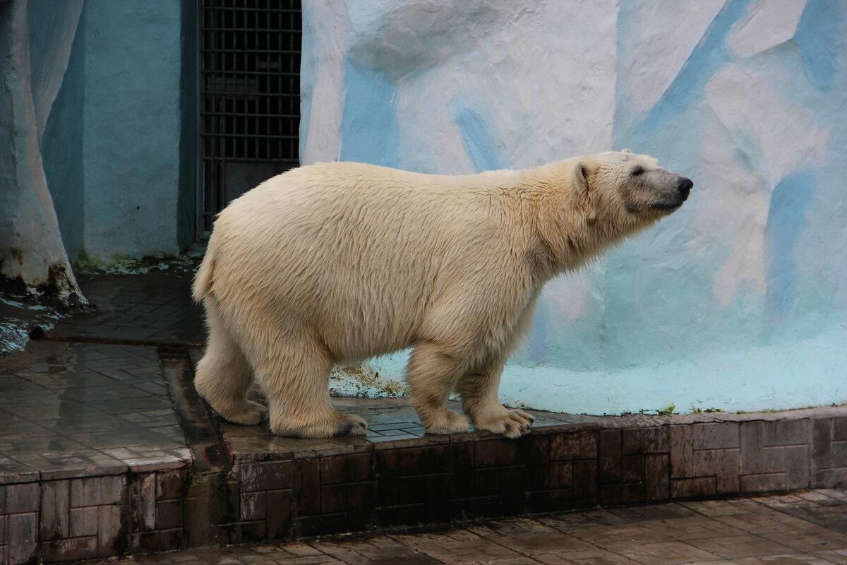 Фото медведя в новосибирске