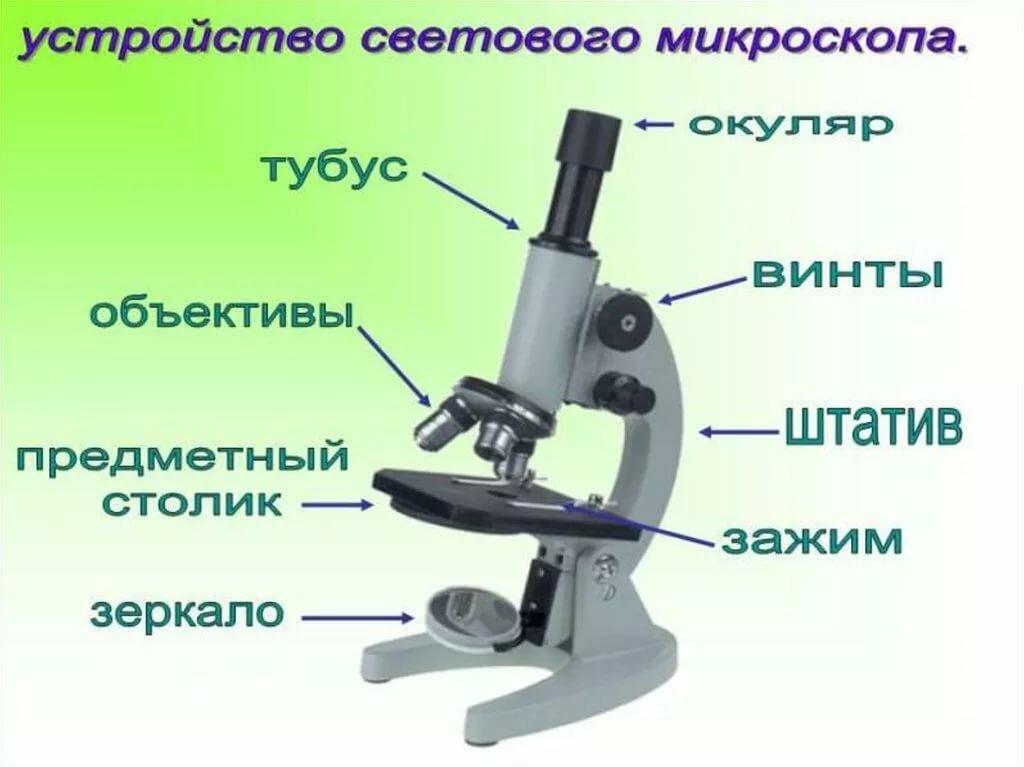 темнокожую красотку микроскоп части картинки имеет