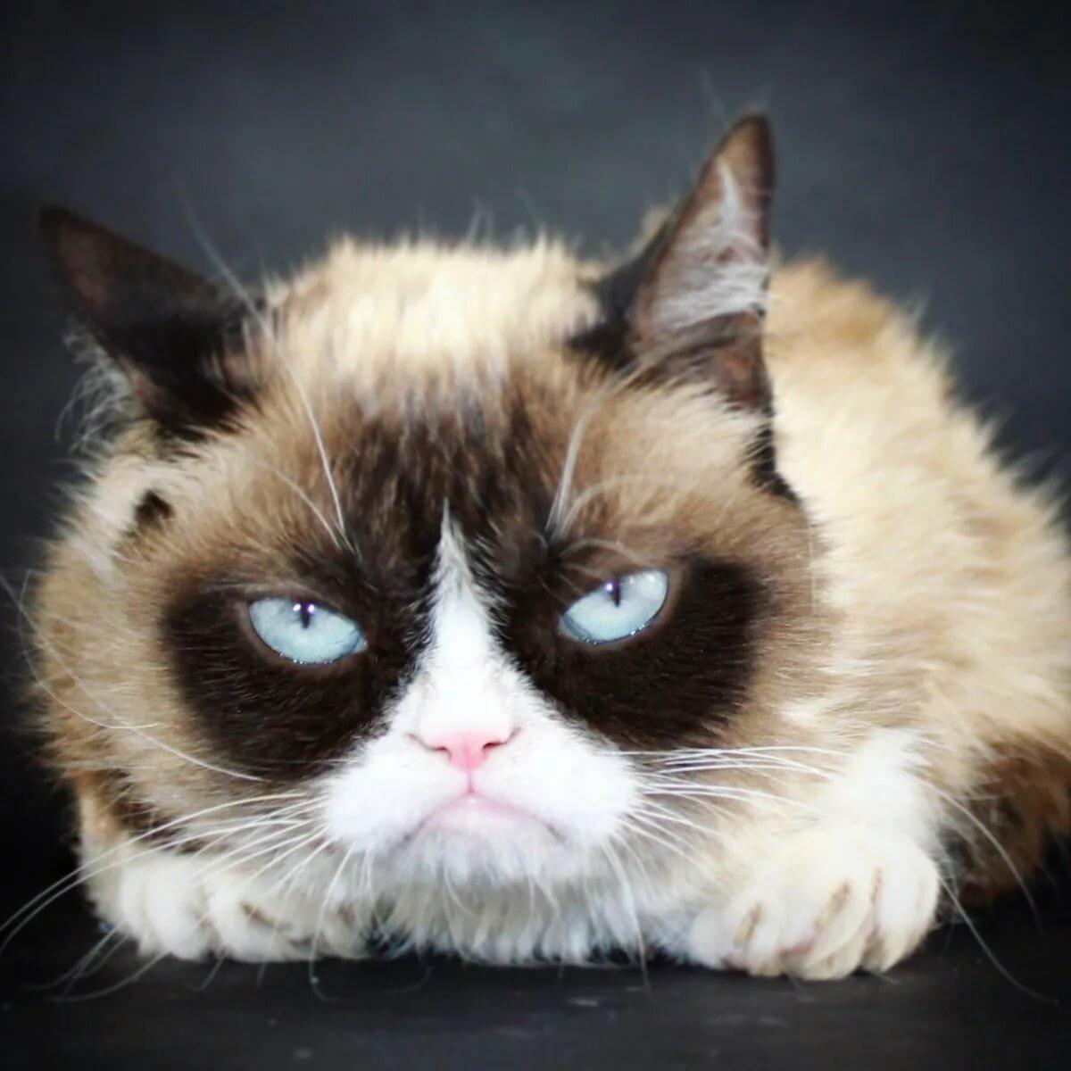 прически кот грампи картинка деятели искусства