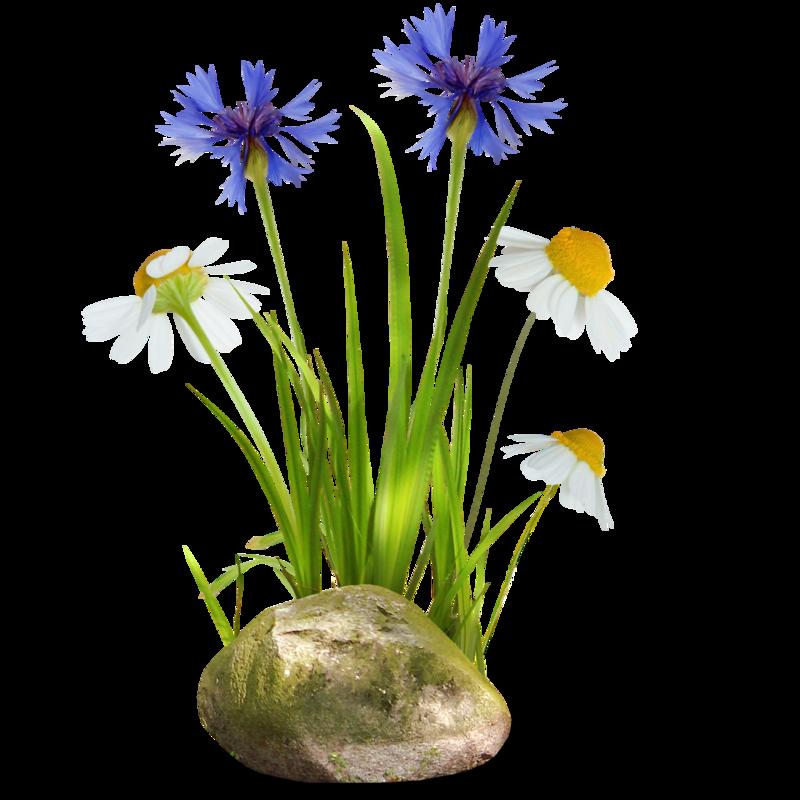 данной картинка полевые цветы на прозрачном фоне сисадмина впадает