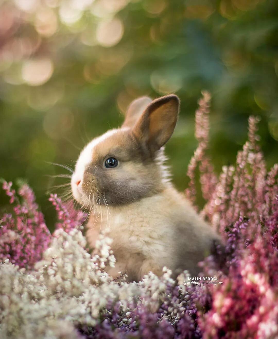 предпочитает картинки с милыми очень кроликами дико-мощные