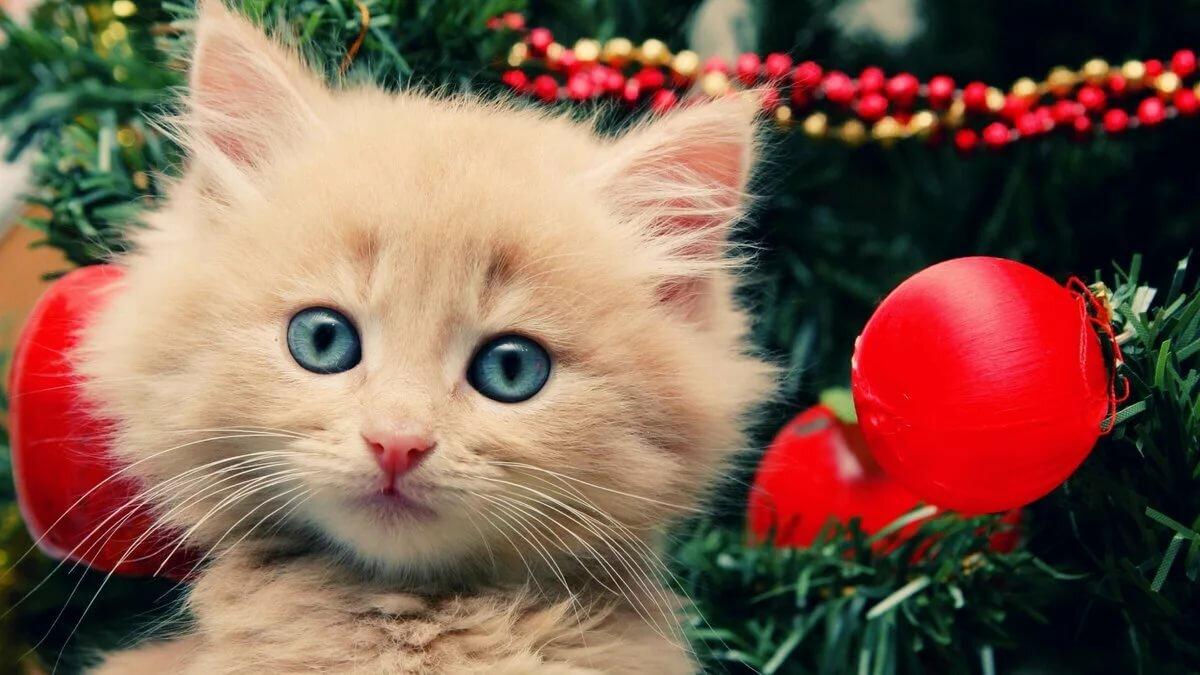 Котик новый год картинка
