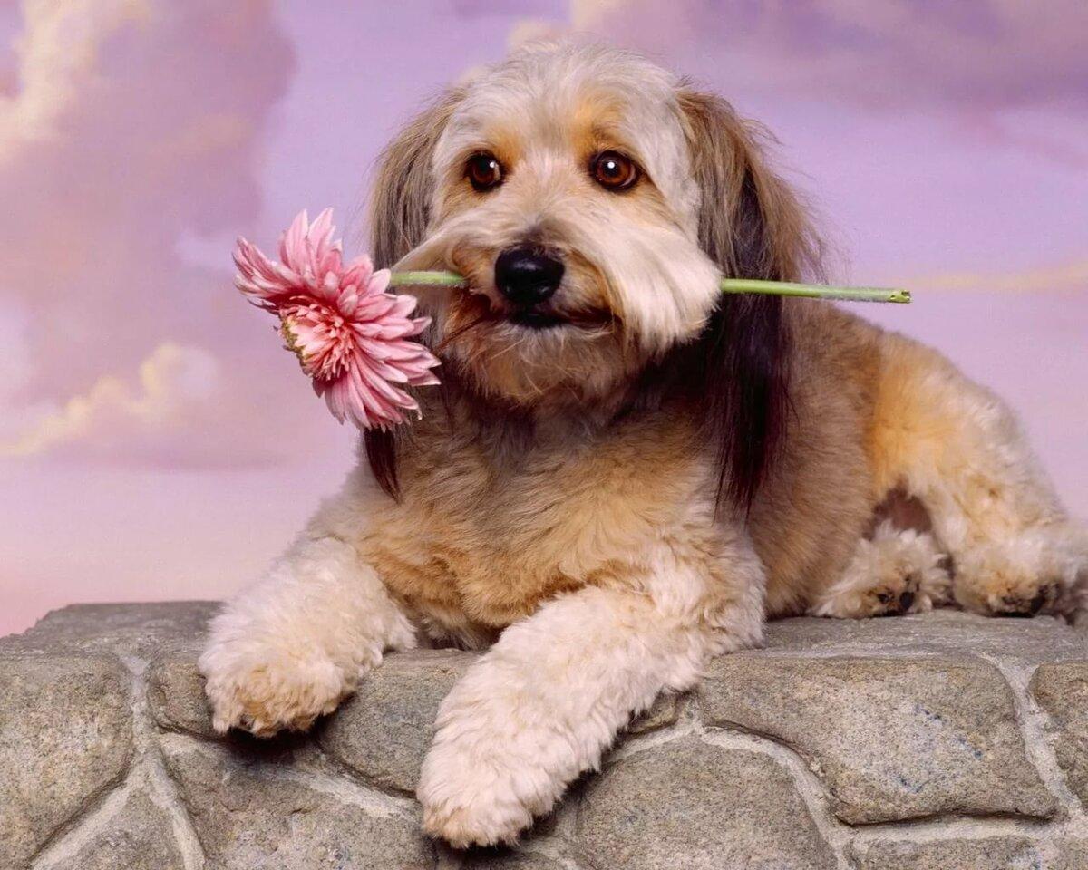 Извинение, прикольные открытки с животными и цветами