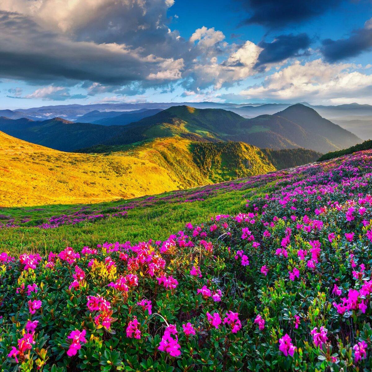 Картинки для, картинки про природу и цветы