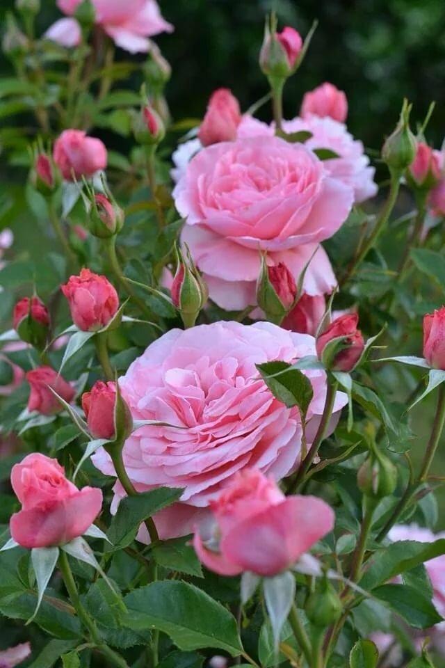 Красивые букеты из роз и хризантем фото нас продаже