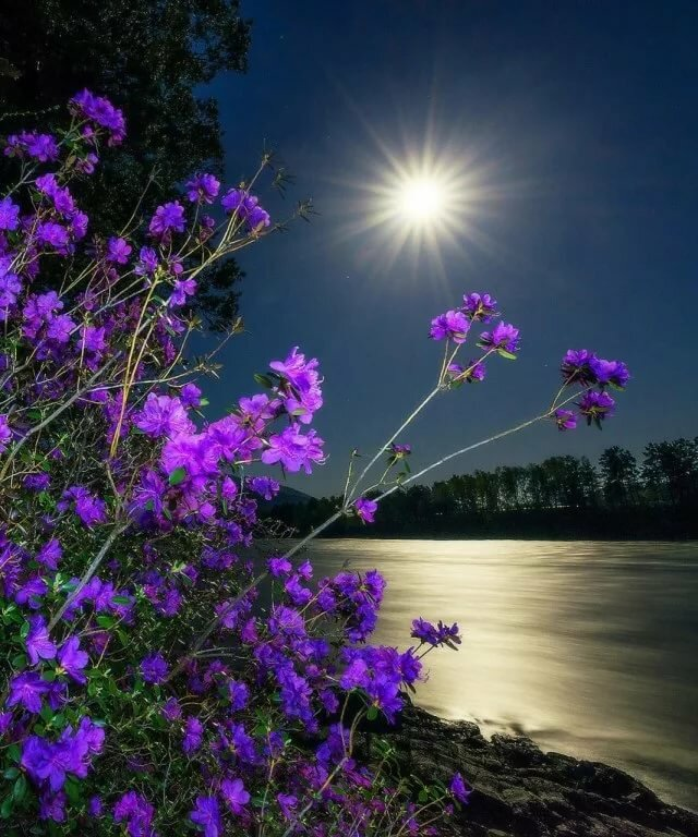 Картинки спокойной ночи оригинальные на природе