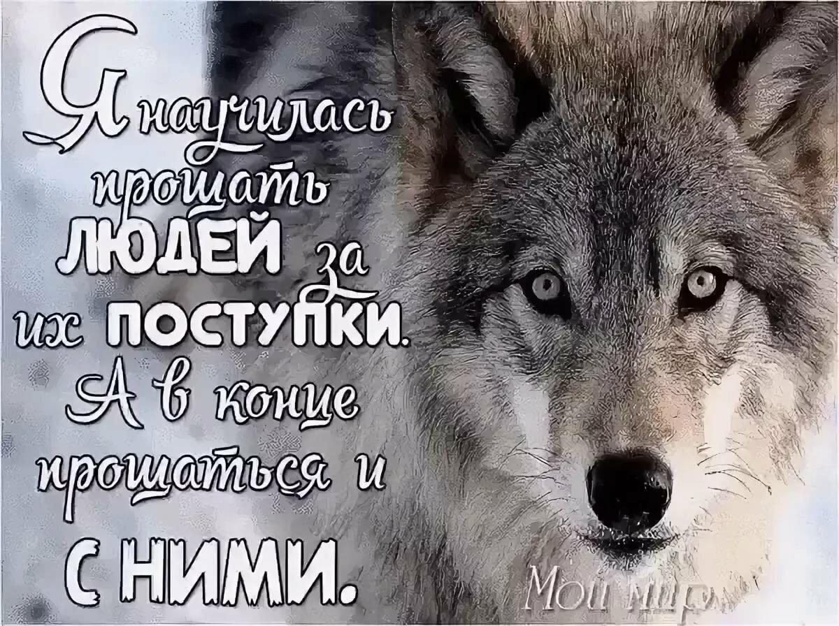 Красивые картинки волки с надписями