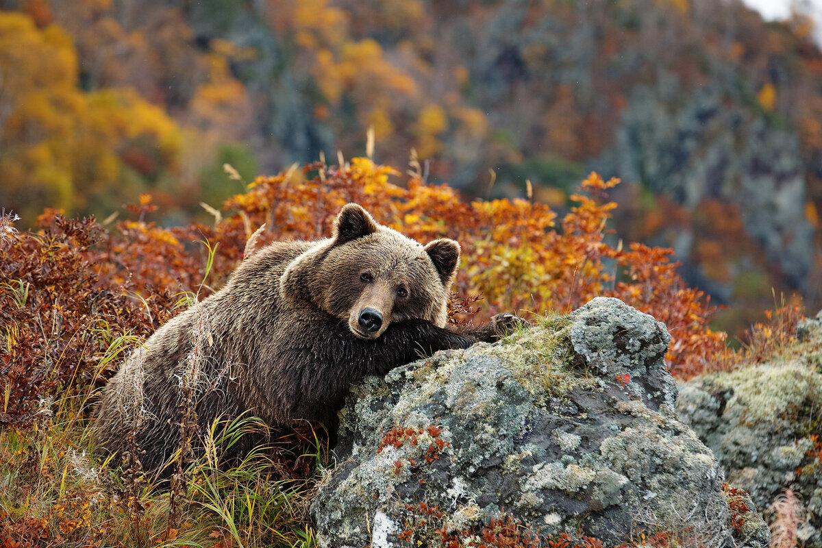 Картинки животный мир россии, бальзамин
