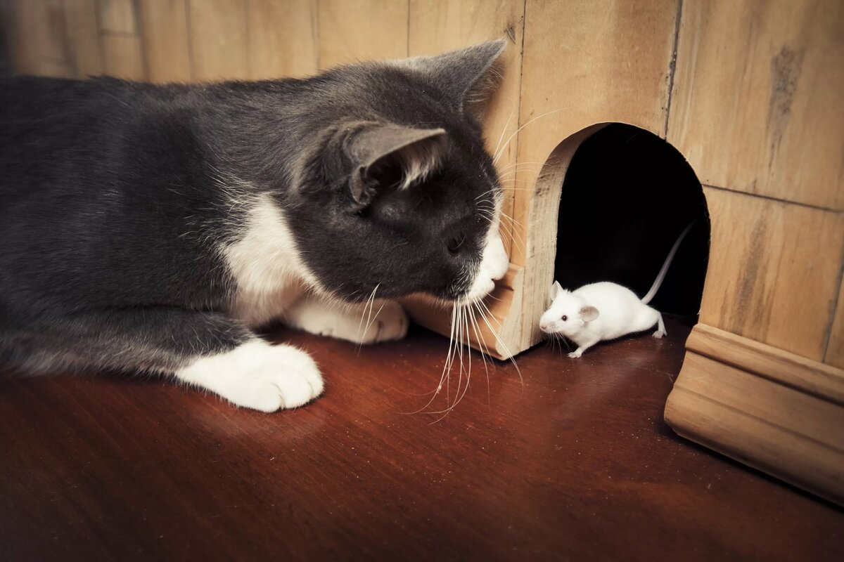 Кошки и мышки картинки