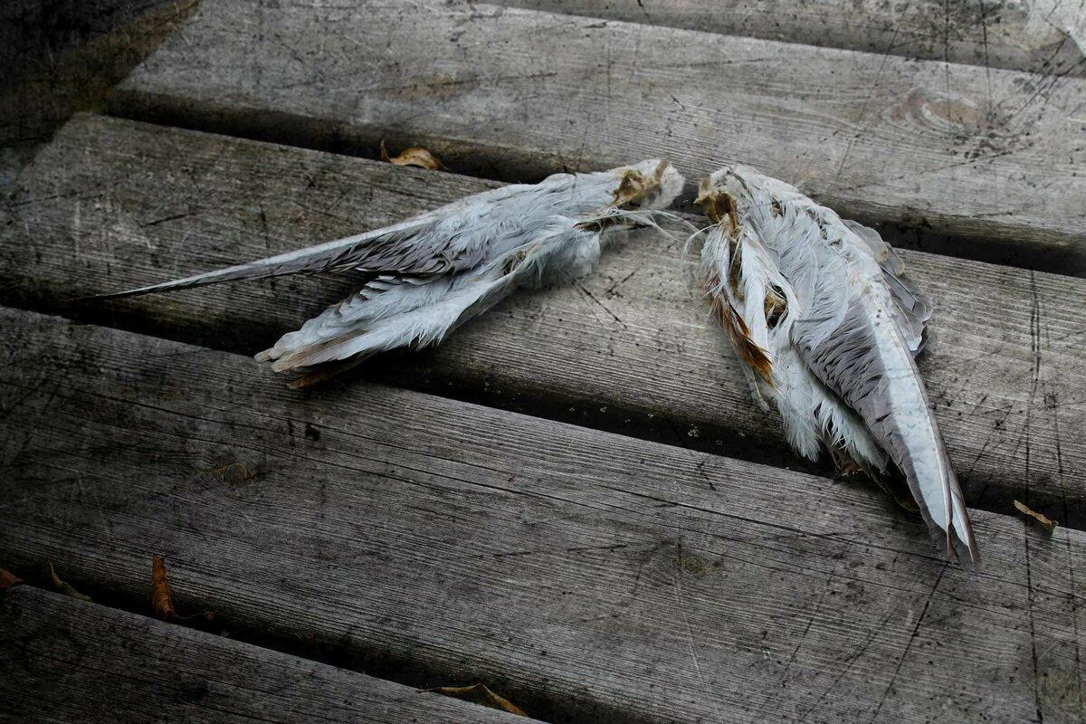 Картинка поляна птиц как вариант
