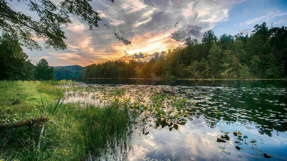 картинки речка лес лето насыщенная