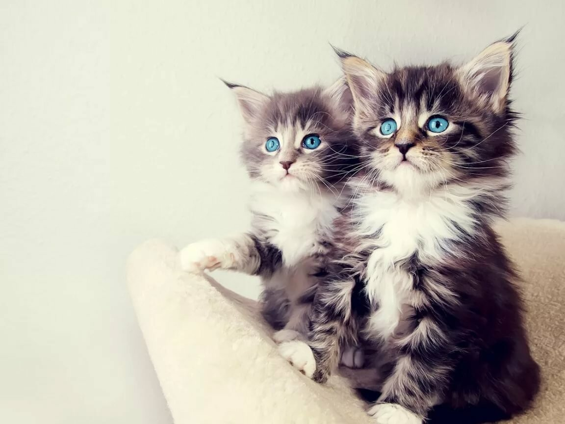 Картинки милые смешные кошки, байкеры