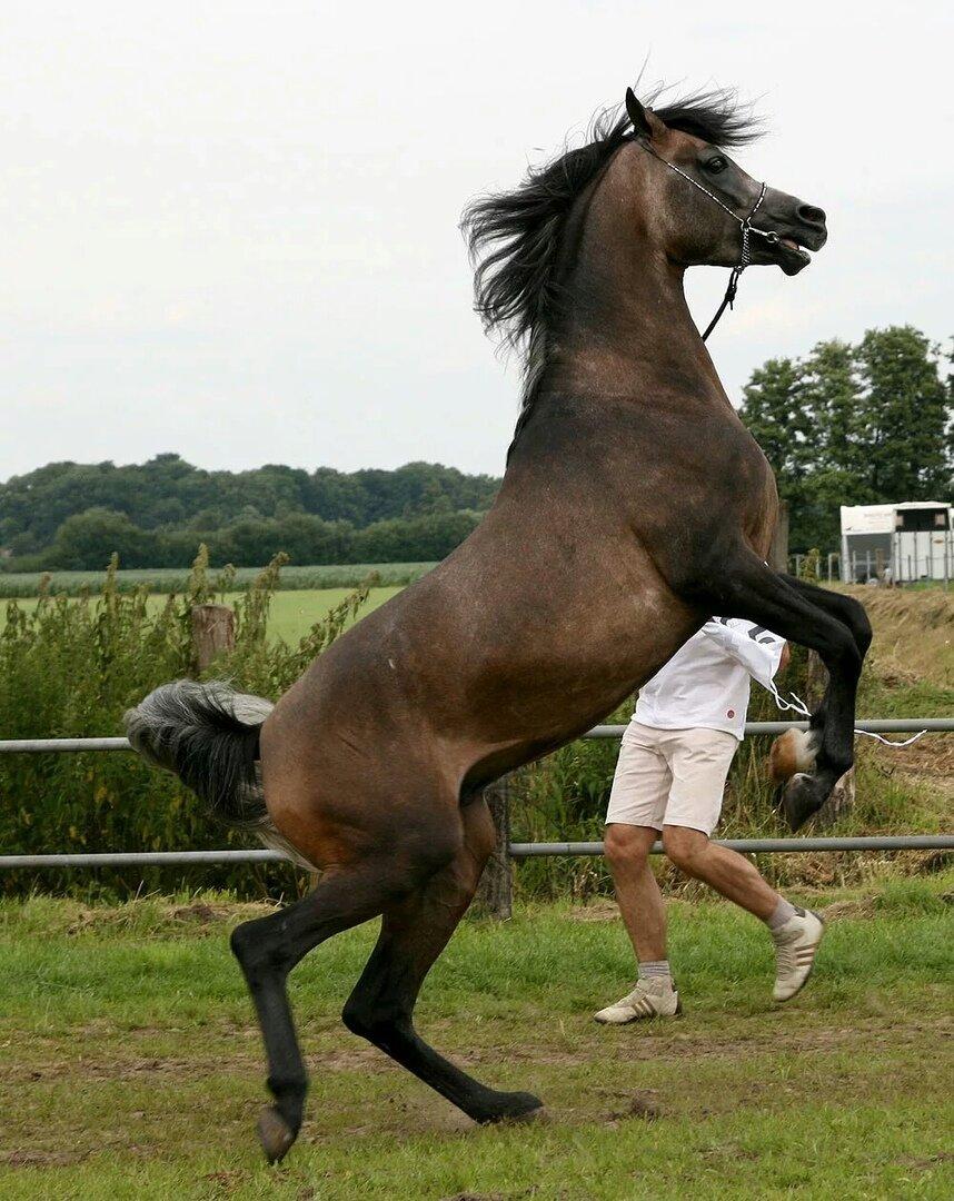 Картинки слайды о лошадях вилейский район