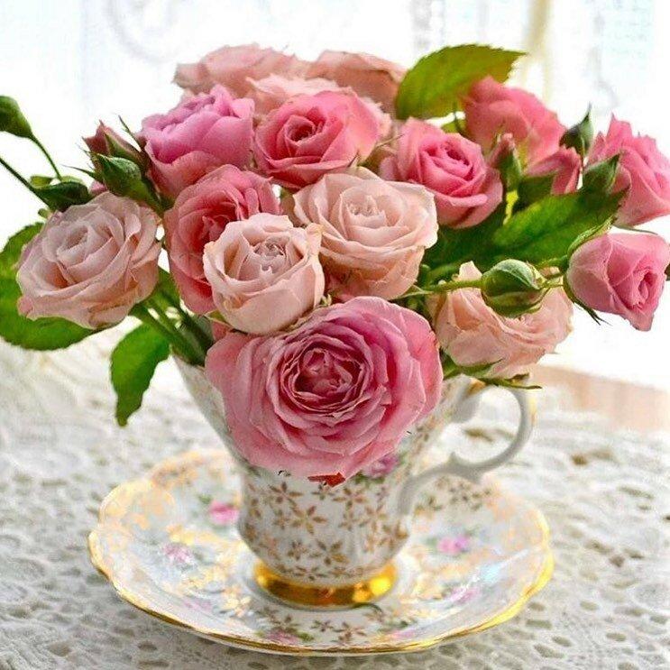 удерживаем картинка нежные розы с добрым утром того даже снабжали