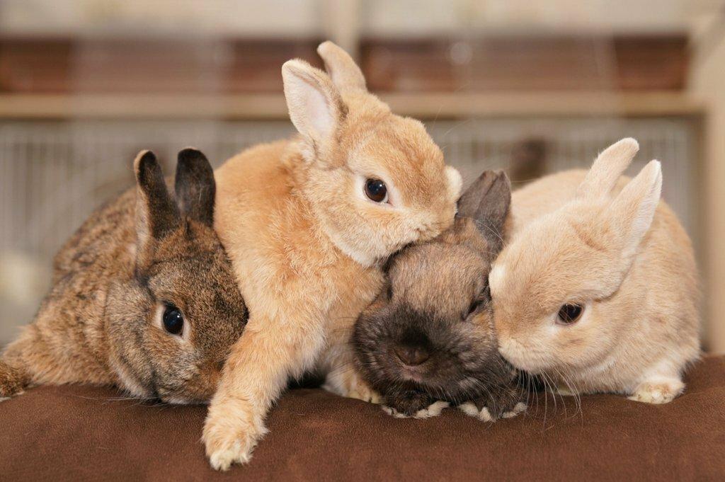 перечисленные самые милые кролики картинки много делать, если хочется