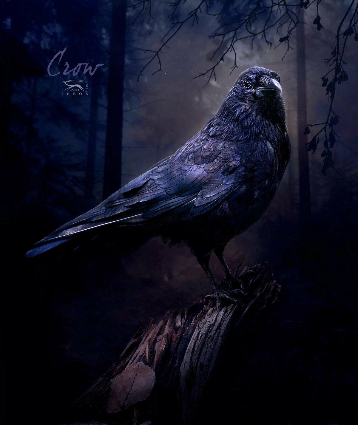 сделана картинки ворона темная крючков кронштейнов