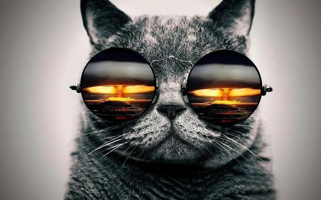 Картинки на телефон коты крутые