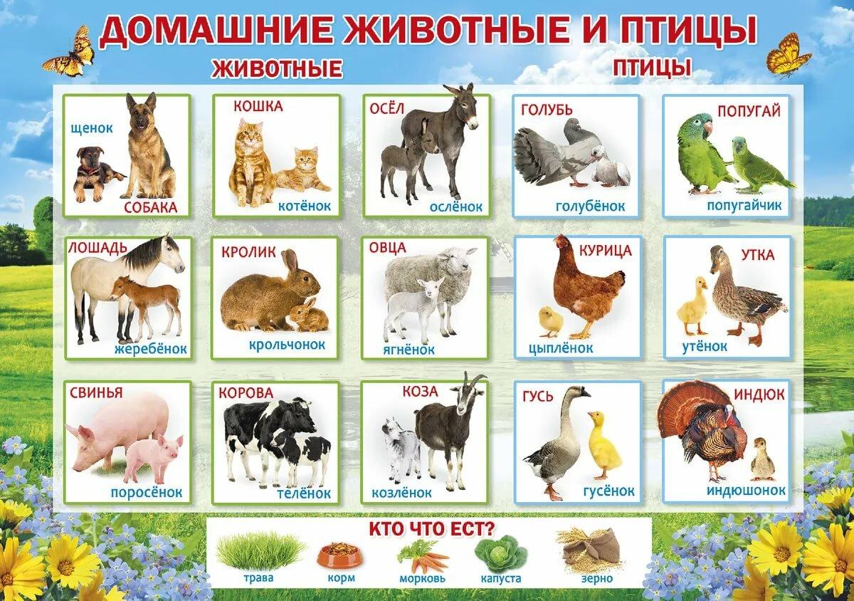картинки домашних животных и птиц для малышей крем понравится вашим