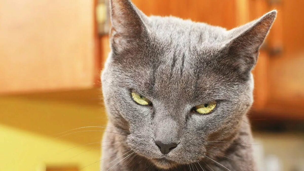 Фото кота прикольные