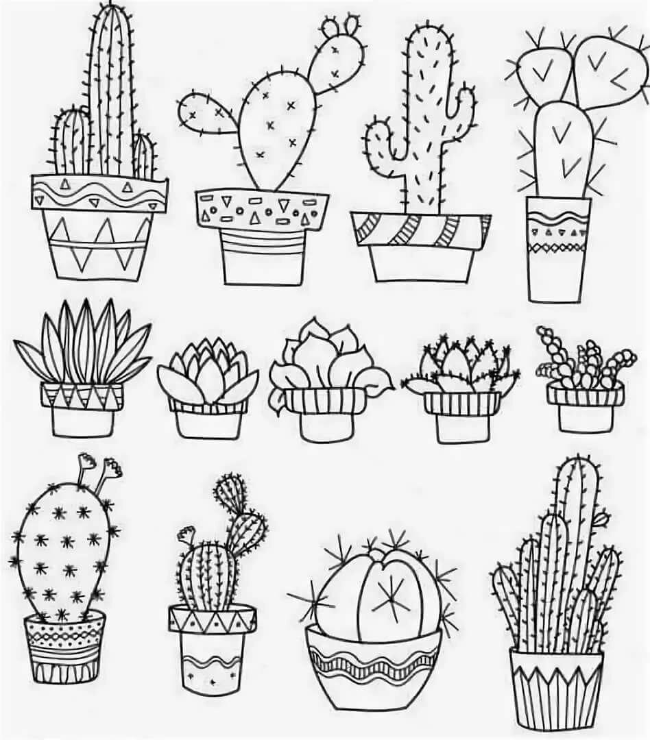 картинки милые картинки кактусов черно белые мартинелли также подозревается
