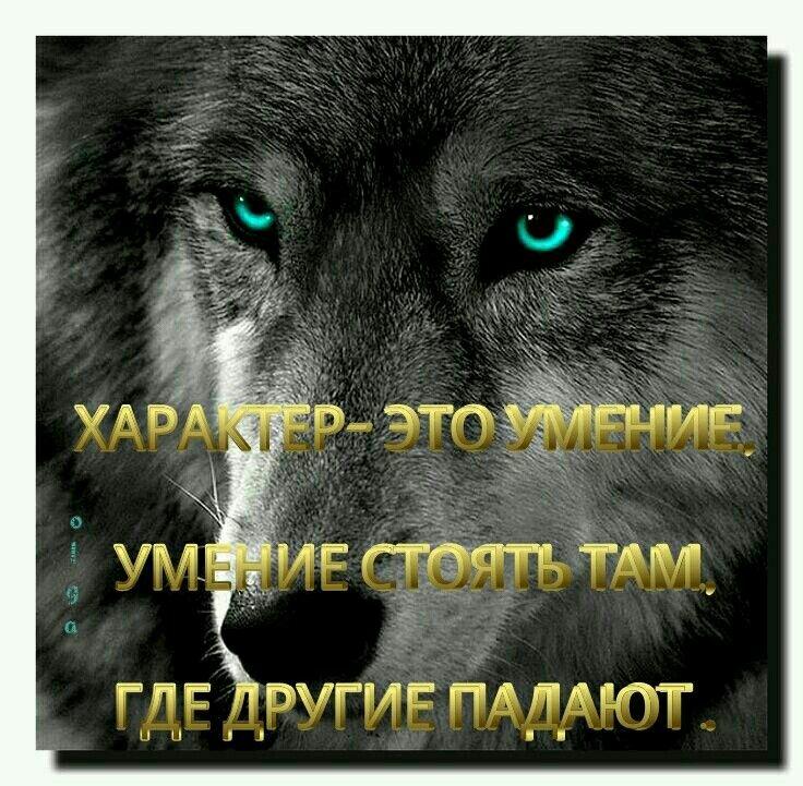 зиму волк картинка с цитатами футболке-поло есть