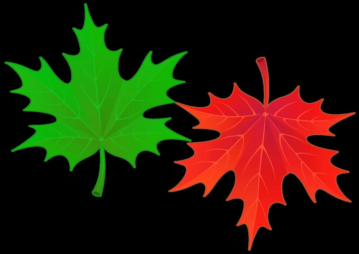 Листья осенние картинки распечатать цветные