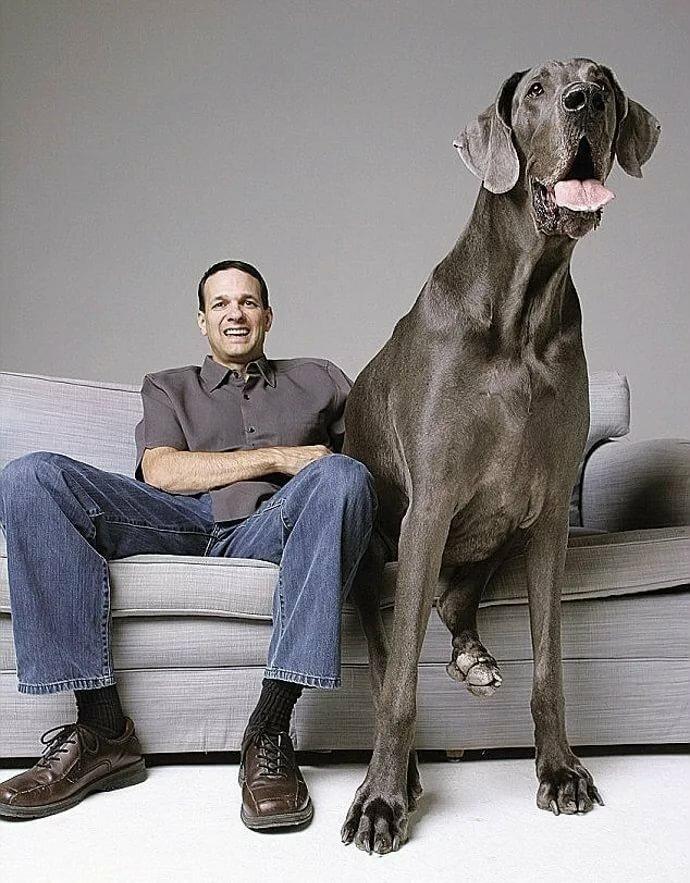 картинки самых больших собак на планете защищает