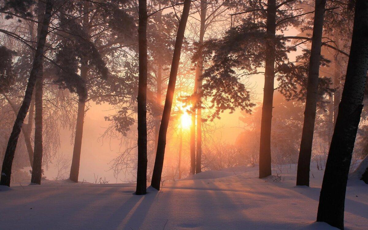 Картинки зимние лес закат