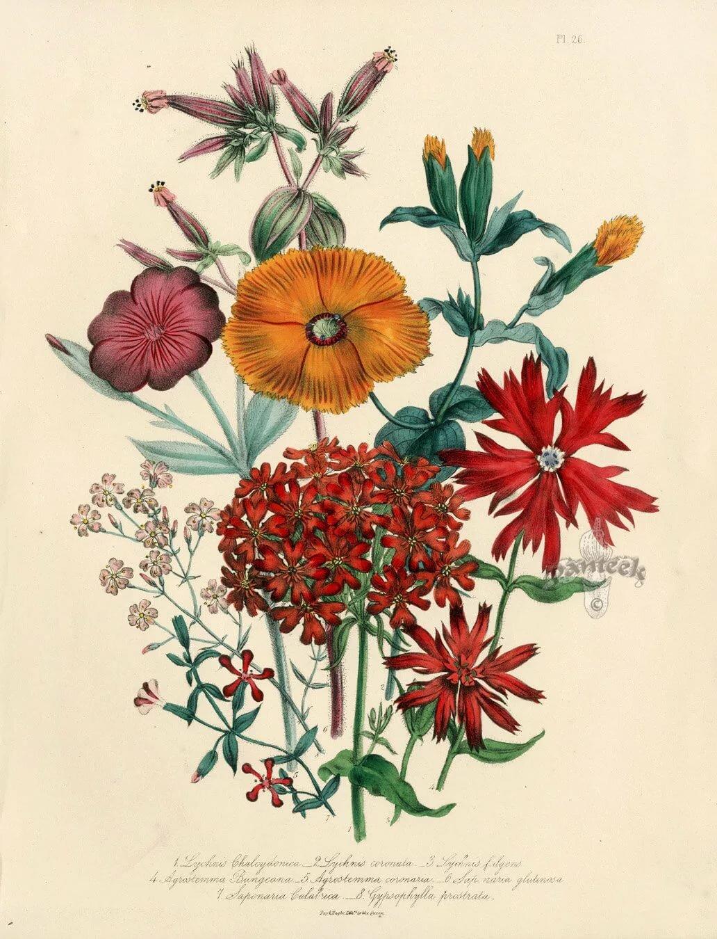 Ботанические картинки, днем рождения бабушку