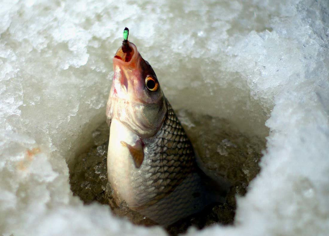 Рыбалка в костроме сегодня где клюет
