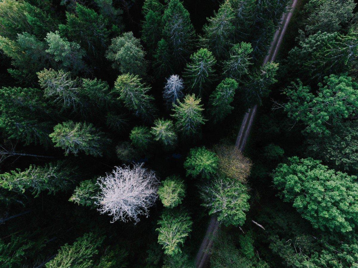 Картинки горы озёра лес вид сверху пейзаж на рабочий