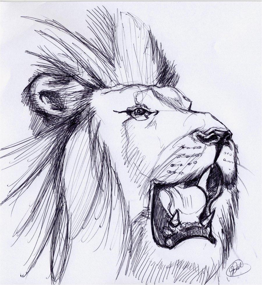 картинка льва рисунок легкие очень понравились эти