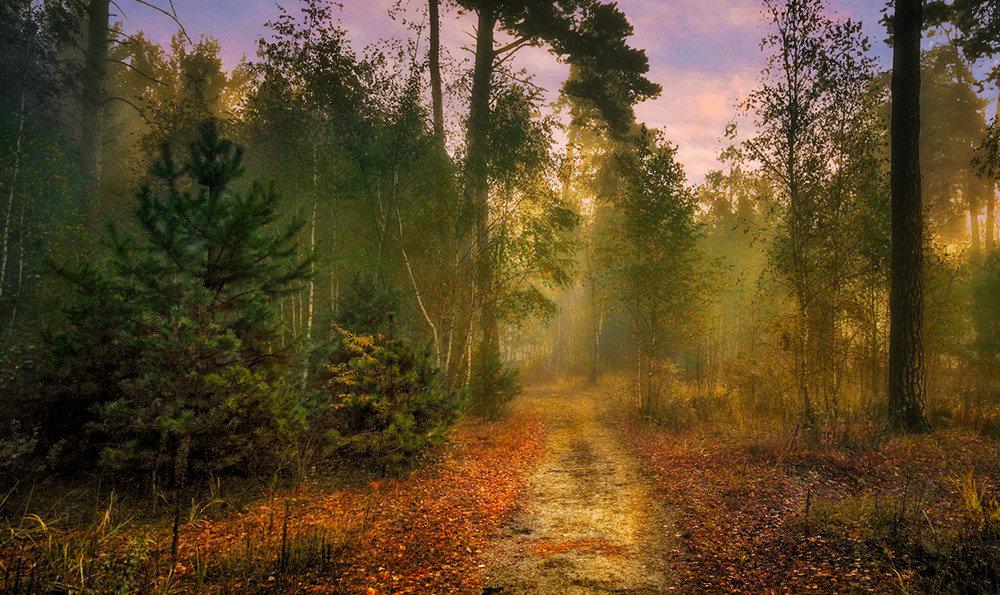 Красота леса утром