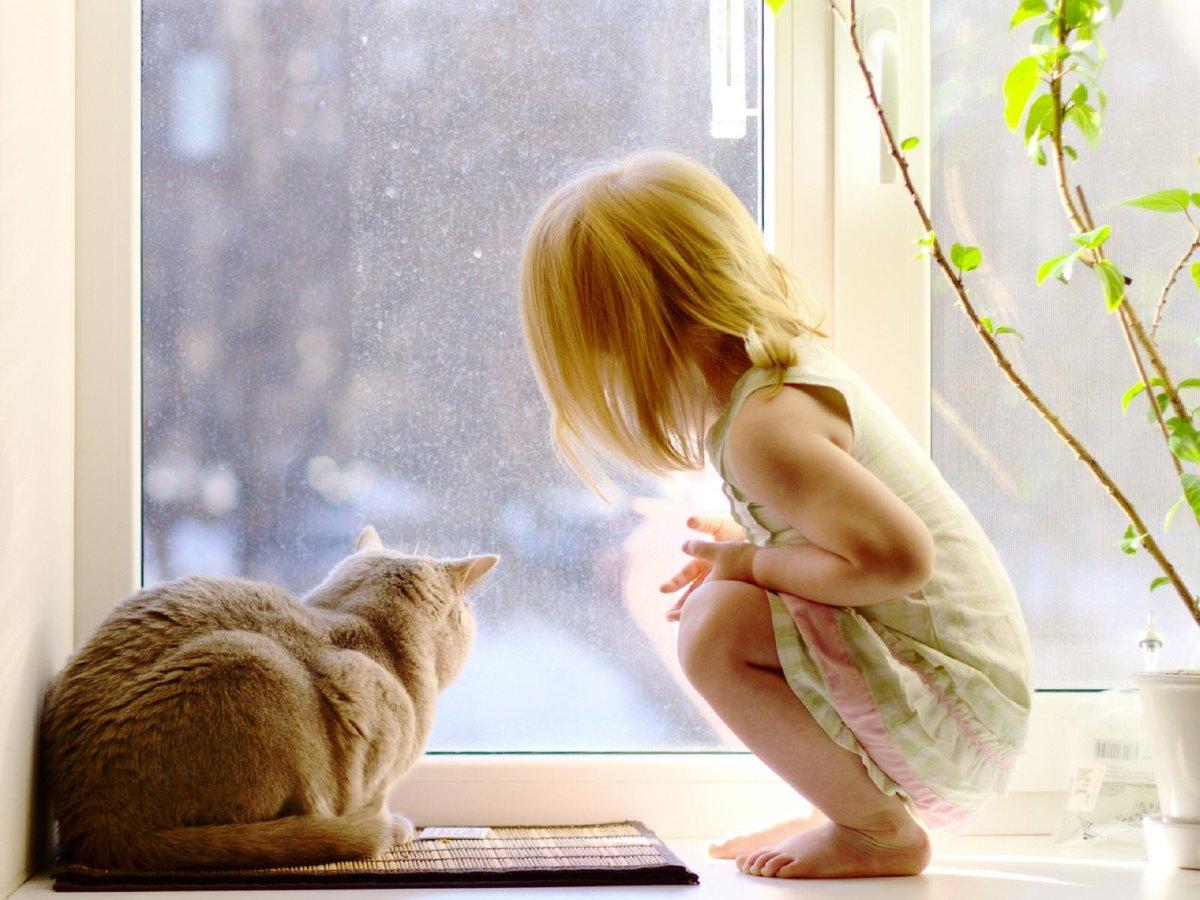 Белого картона, картинки девушка с кошкой у окна