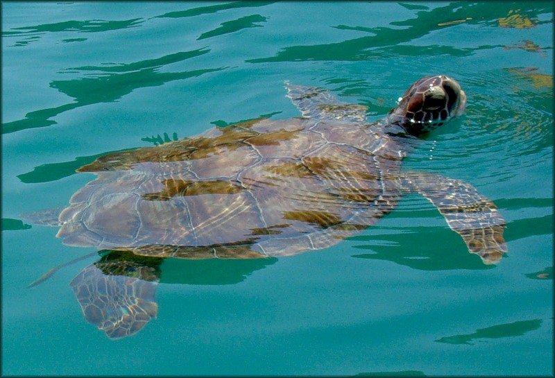 фото турция сиде остров черепах сделать розочку огурца