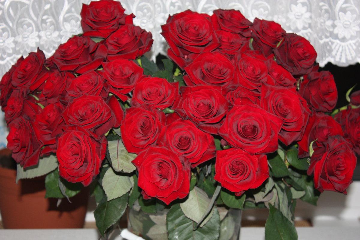 знатоков бытует букет роз фото для любимой утепления дома бруса