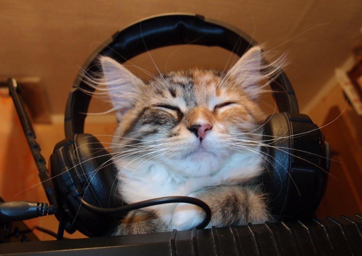 Картинка котик слушает музыку рисунок