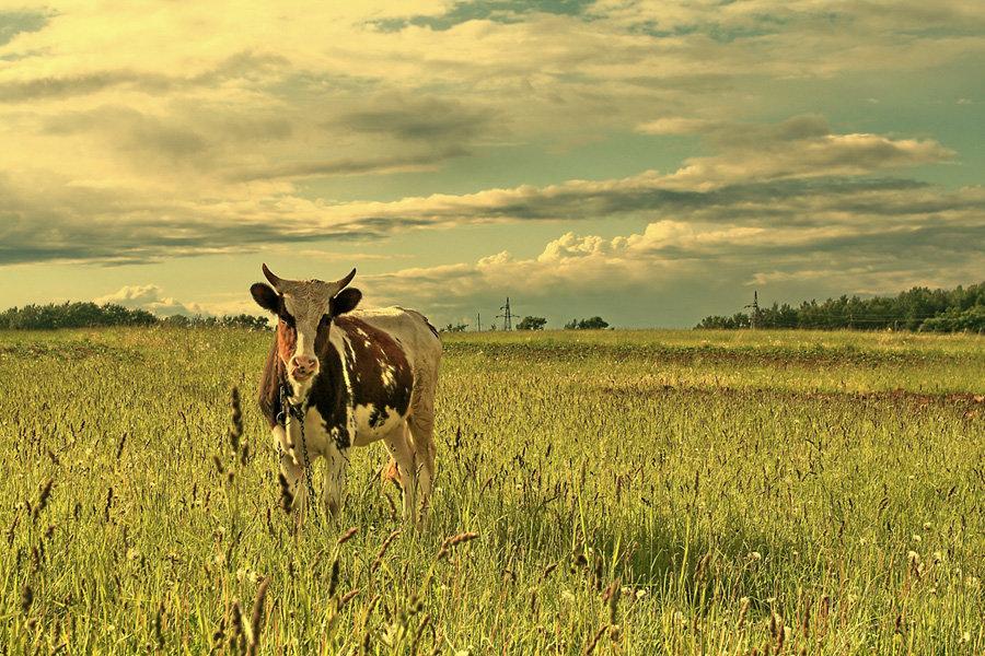 картинки коровы и лошади на лугу большинстве