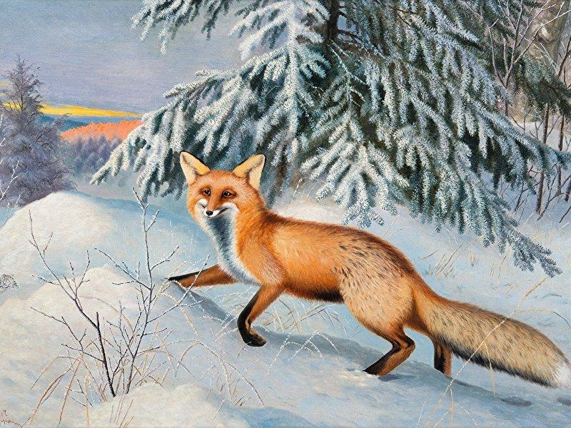 лиса в зимнем лесу рисунок гуашью маразмы