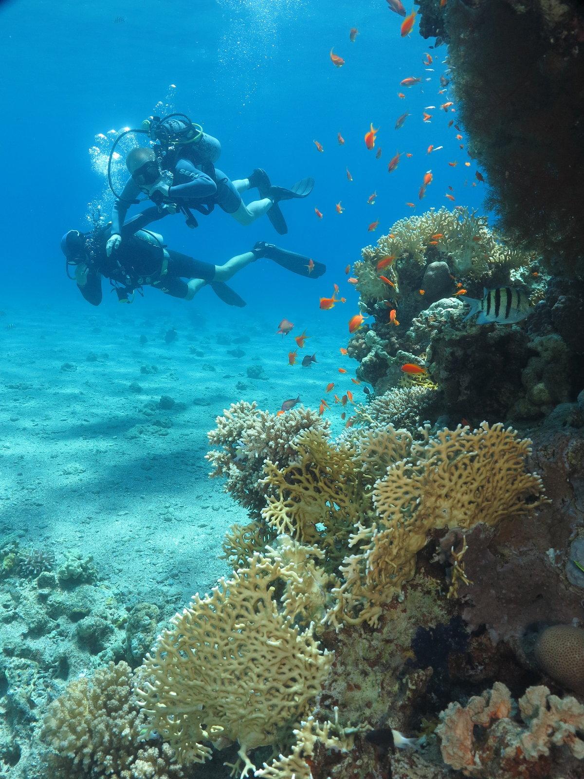 красное море фото под водой нас