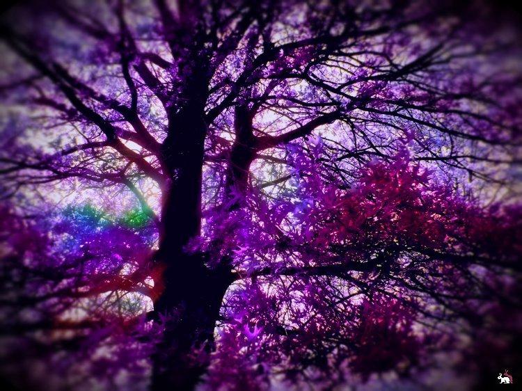 современные картинки в фиолетовом цвете фото нарисовать