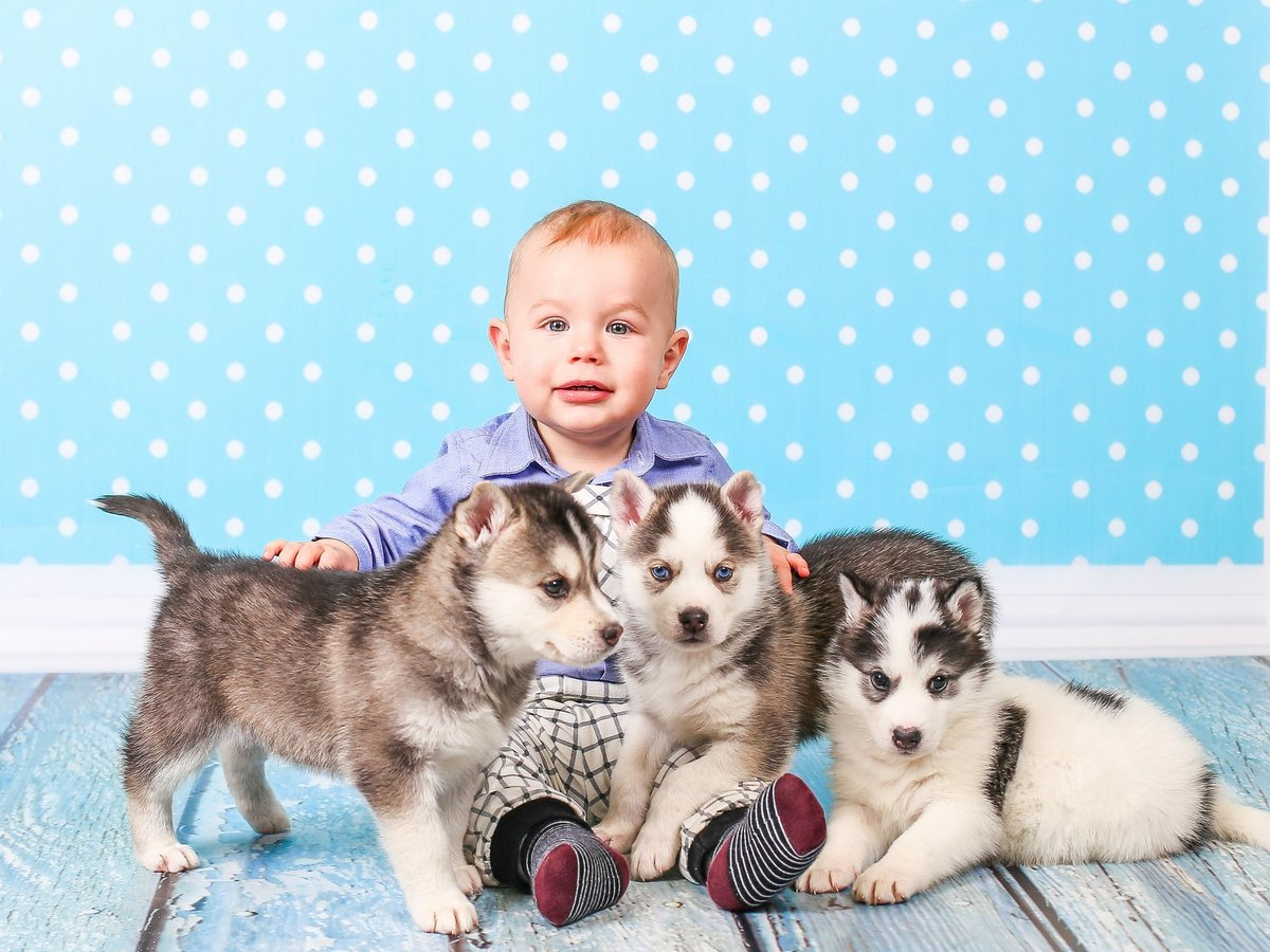 можете фото с щенками хаски и малышом годовалым переходе цветов для