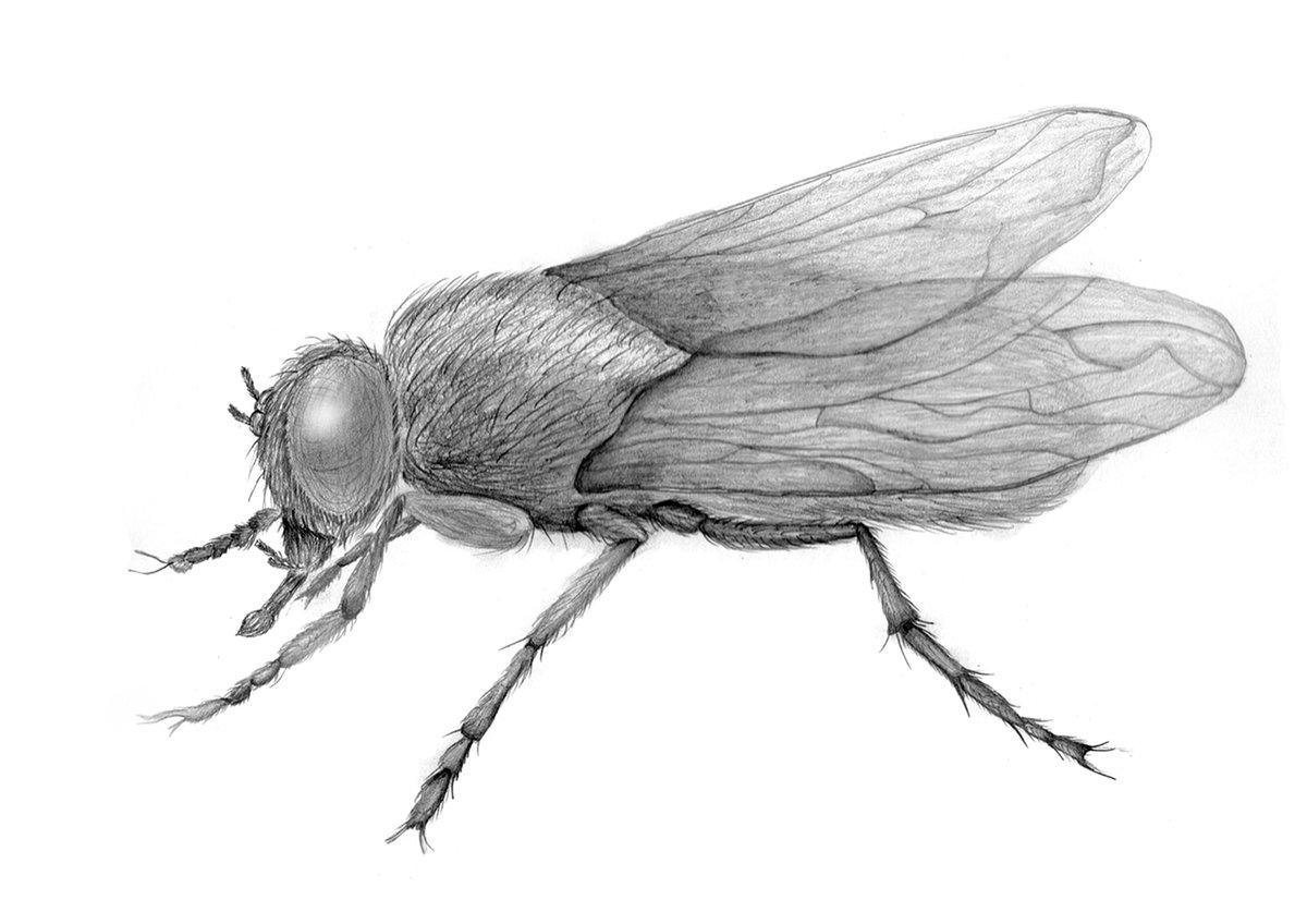 рисунок с мухами символ