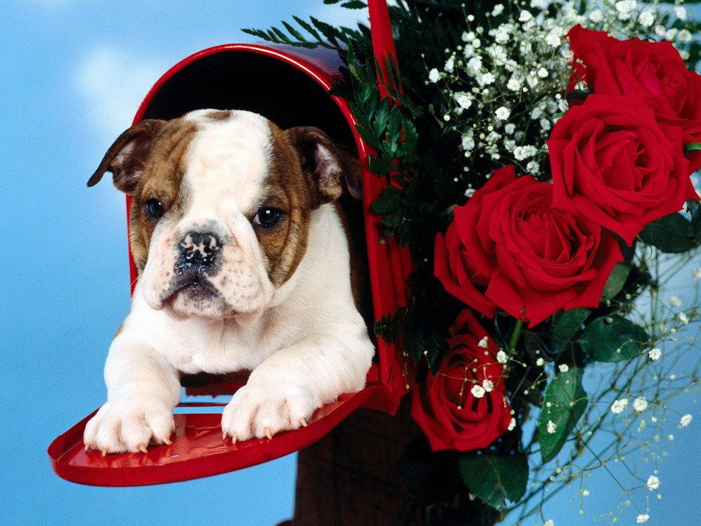 Собака с цветком открытка