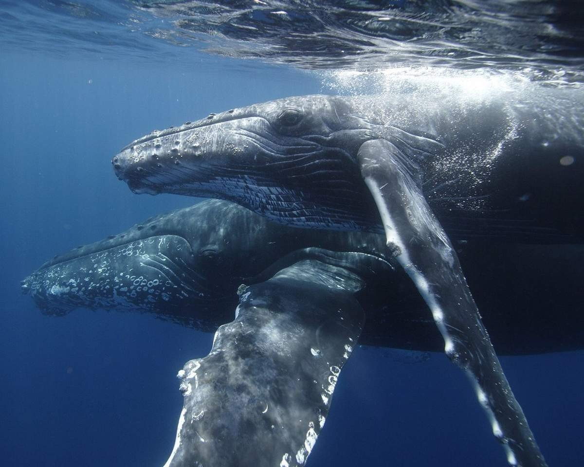 Картинки с китами на рабочий стол, картинки