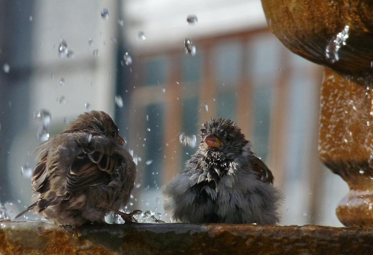 Мокрые птицы картинки