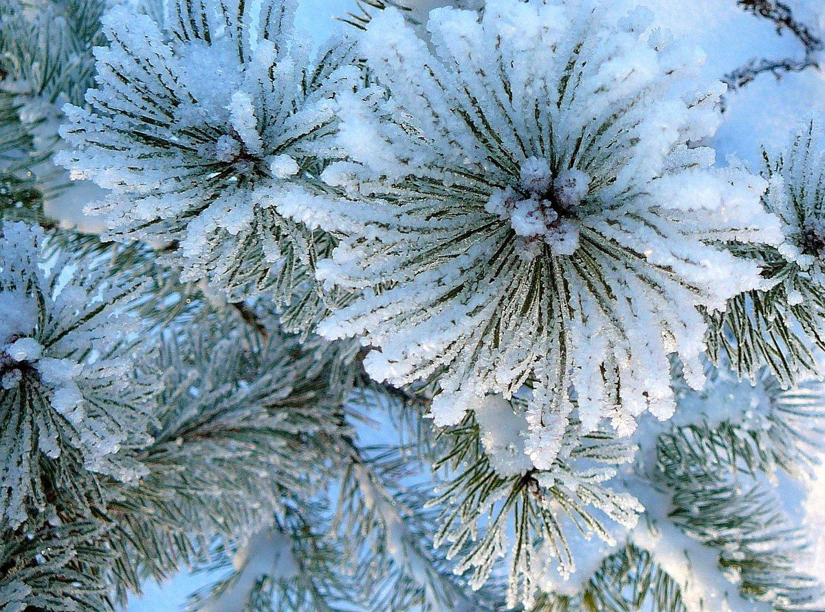Цветы зимой картинки, фразы открыткам