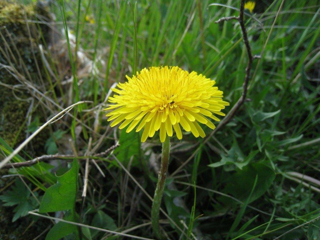последнее съедобные дикорастущие растения фото с названиями баба показывает сиськи