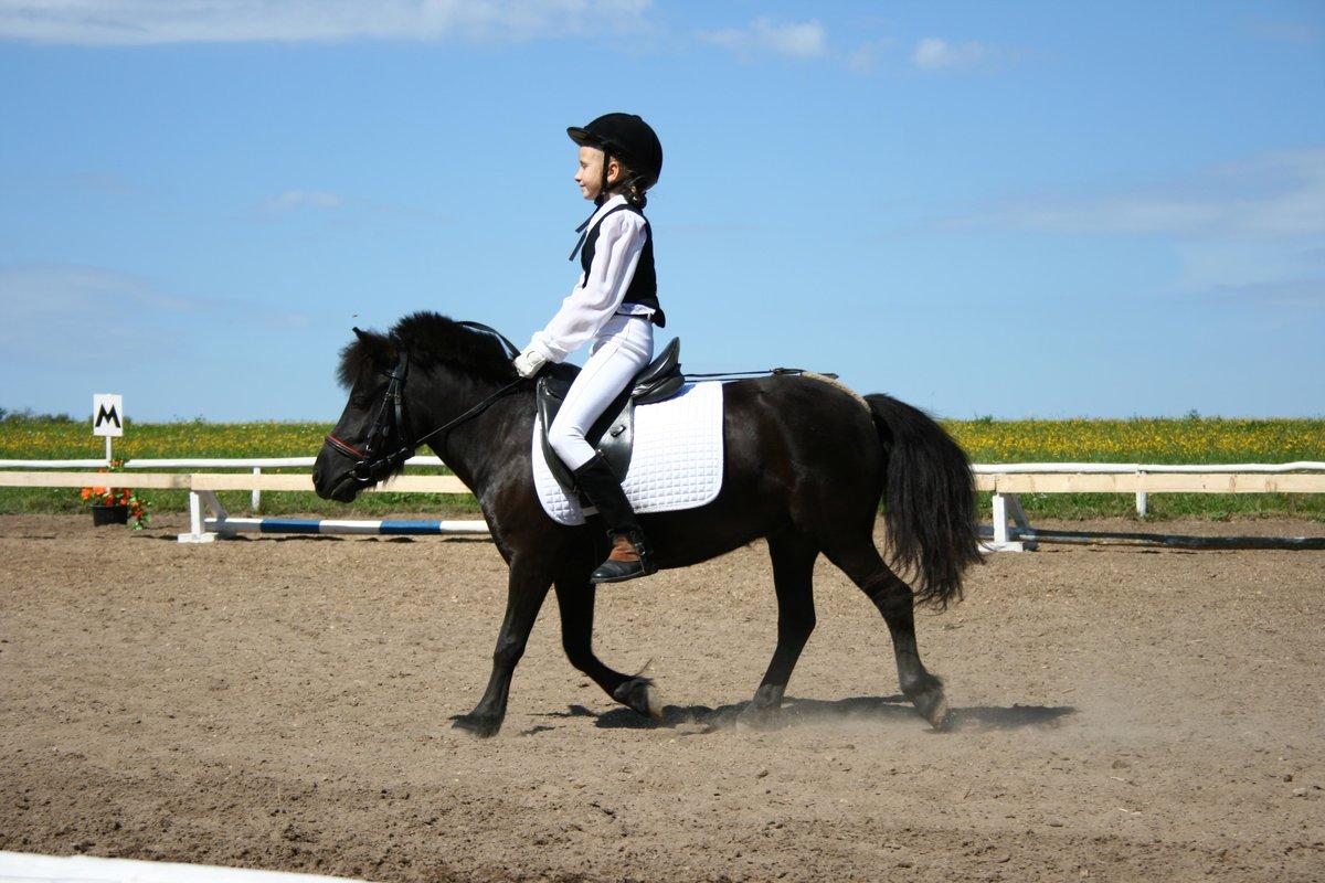 конный спорт в программе ои